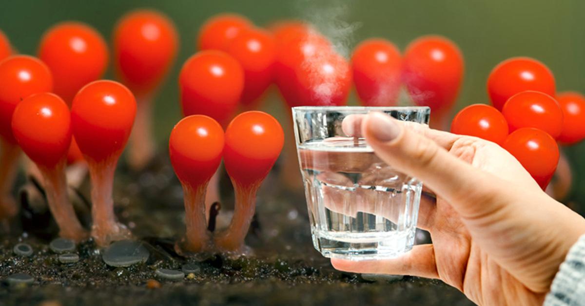 Теплая вода натощак по утрам: польза, зачем нужно пить и отзывы.